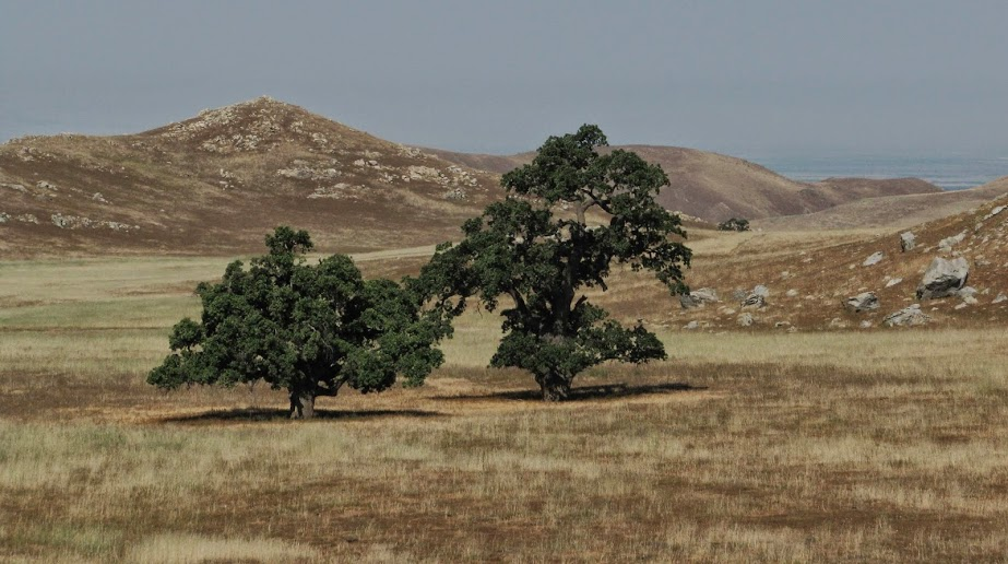 Vally Oaks in Tejon Canyon